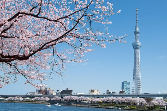 What is TOKYO SKYTREE?