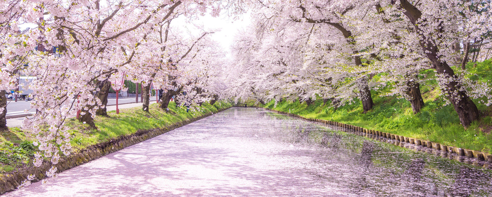 What to Do During Spring in Japan
