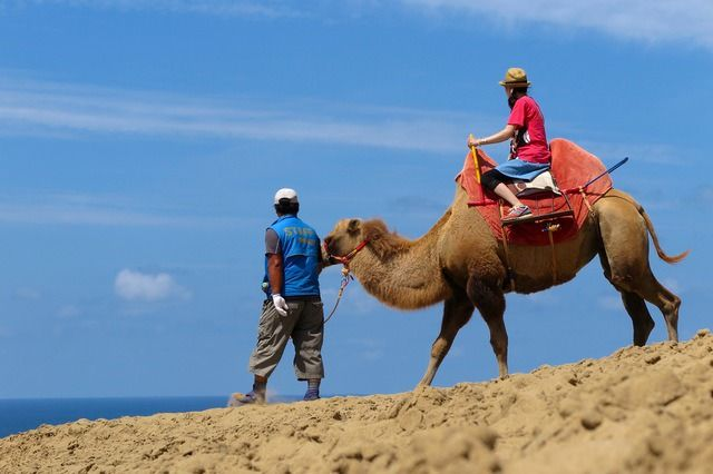 Food and Activities on Top of the Superb Views! A Thorough Guide to the Tottori Sand Dunes